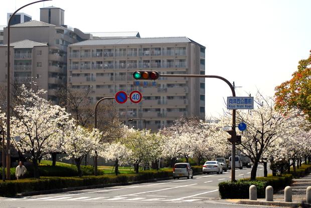 桜 2018.3.28.JPG